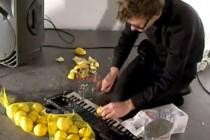 lemonsstill